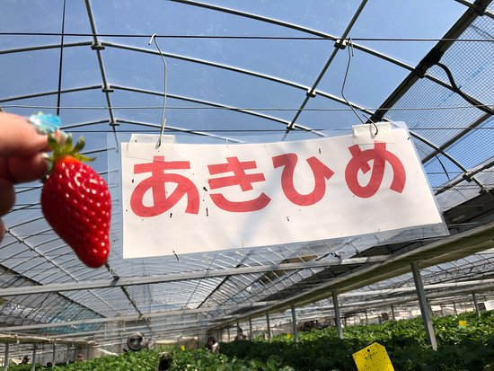 Yasuda Strawberry Farm