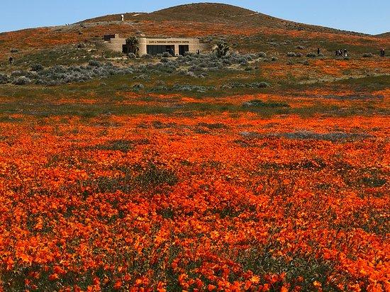 Antelope Valley Poppy Reserve Visitors Center
