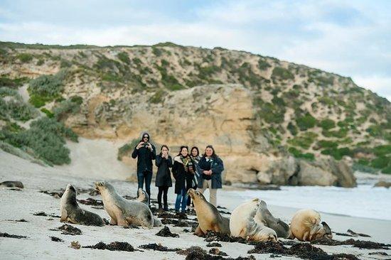 Small-Group Kangaroo Island 4WD Tour...