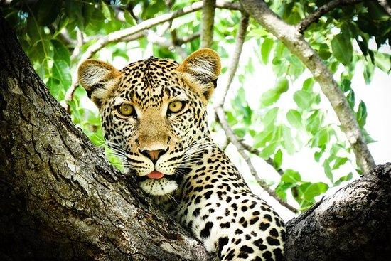 来自比勒陀利亚的7天Kruger和Vic Falls小型野生动物园