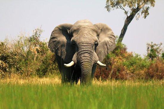 来自津巴布韦维多利亚瀑布的7天Okavango荒野小径野生动物园