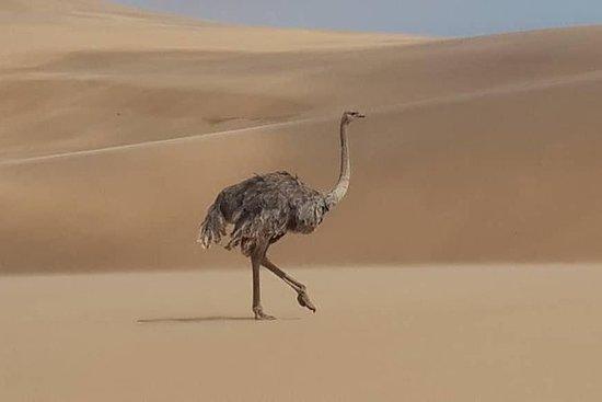 Namib Desert and wildlife photography...