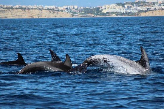 Lagos - observación de delfines...