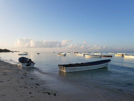 Ilha de Zanzibar, Tanzânia: Excursion pour aller nager avec les dauphins