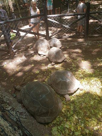 Ilha de Zanzibar, Tanzânia: L'île aux tortues