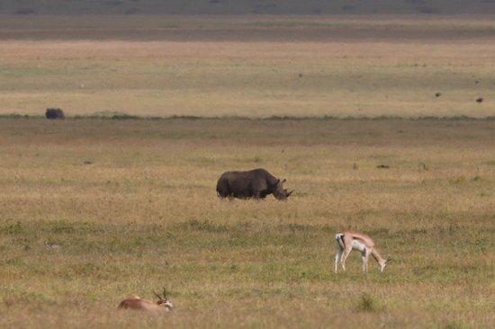 Fotografia de Ngorongoro Conservation Area