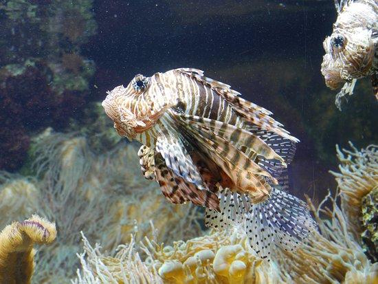 Ouwehands Zoo Rhenen: rare vis