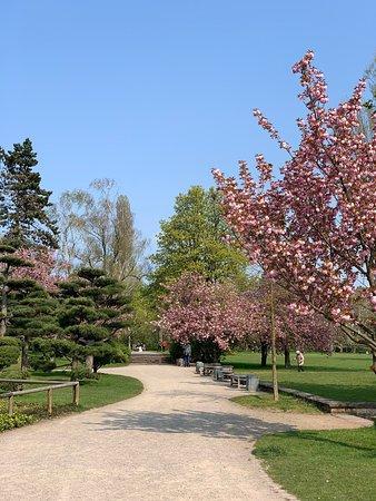 Japanischer Garten Düsseldorf Aktuelle 2019 Lohnt Es Sich