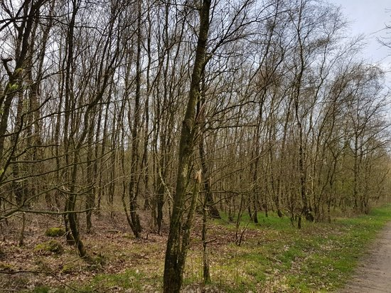 Mandbjerg Skov