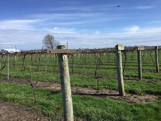 Clearcreek Country Vineyard