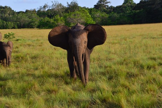 Loango National Park Foto