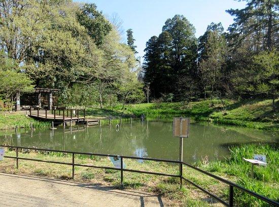 Fujigaoka Park