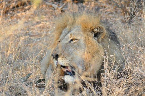 Safpol Safaris
