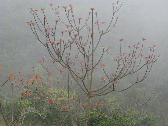 Yen Bai Province, Vietnam: Chồi non xuân mới