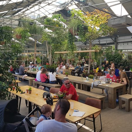 I Ve Never Been In A Restaurant Located Inside A Huge Plant Shop Where Green Is The Main Accent Picture Of Cat S Kitchen Estepona Tripadvisor