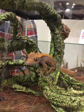 Постоянная экспозиция и выставка террариумных животных