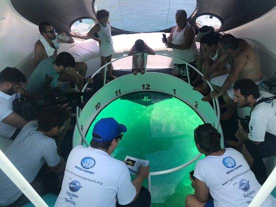 Barco Nautilus