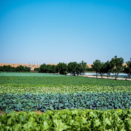 Emirát Abú Dhabí, Spojené arabské emiráty: Enjoy the colorful fields at Emirates bio Farm.