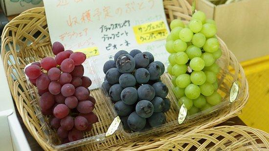 Sakamoto Vineyard