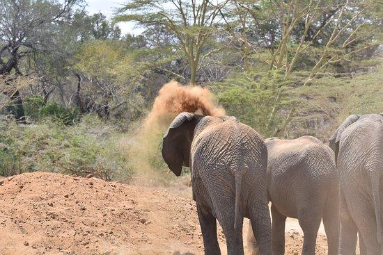 Национальный парк Чиулу-Хиллз, Кения: Umani Springs Mud-bath Session