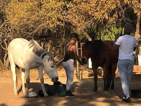 Unathi Horseback Trails