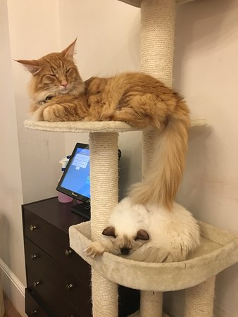 Cat Cafe Liverpool: Relaxing in bed!