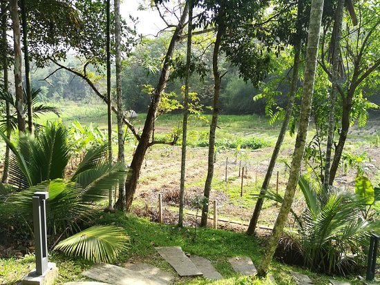 Wayanad-The Woods stay.