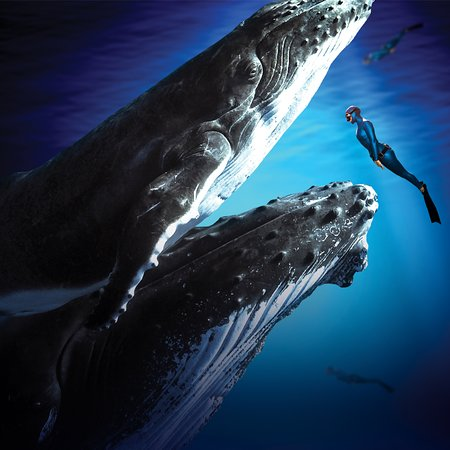 ‪‪Castleford‬, UK: Fearless wanderers, enchantment hunters and virtual explorers, get closer to the inspiration of our blue ocean in our new VR Experience, Swimming with Humpbacks.‬