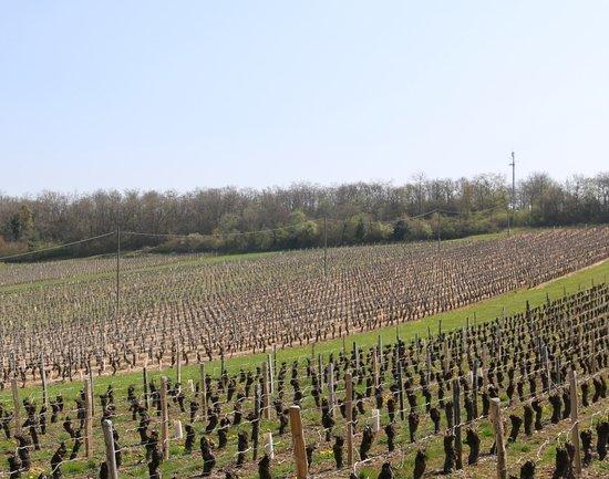 Vue du vignoble autour de Royer
