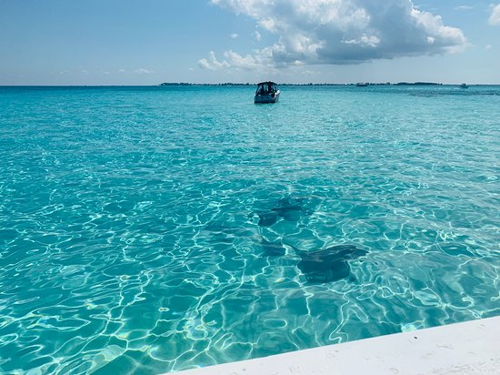 Caribbean Princess: Stingray City, Grand Caymans