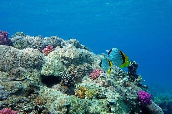 Sous-marin Sinbad en mer Rouge