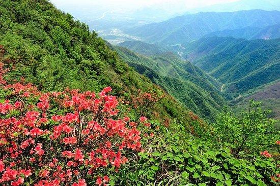Private Tour: Yao Mountain and Tea...