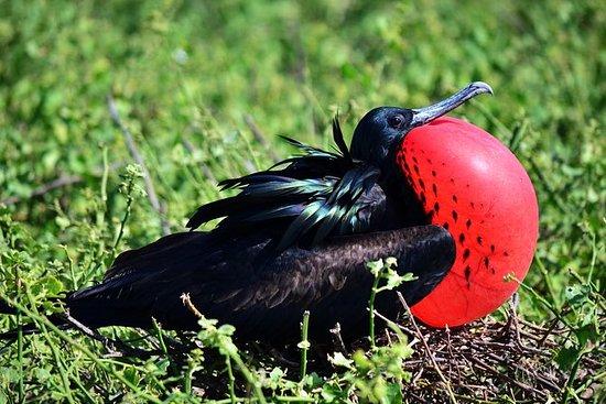 6-dages Galapagos Islands Highlights...