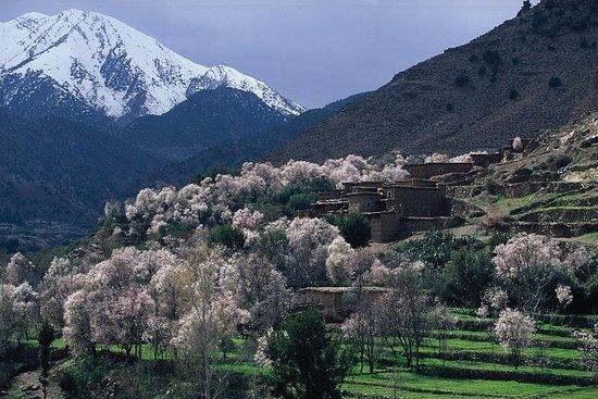 马拉喀什的阿特拉斯山脉和4个山谷私人之旅