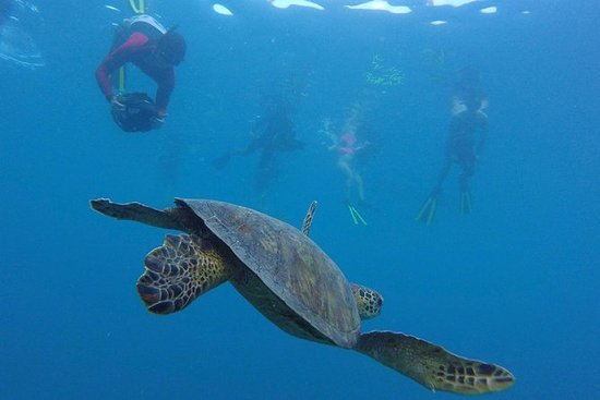 """Snorkel do """"trotinette"""" do mar de AVA"""