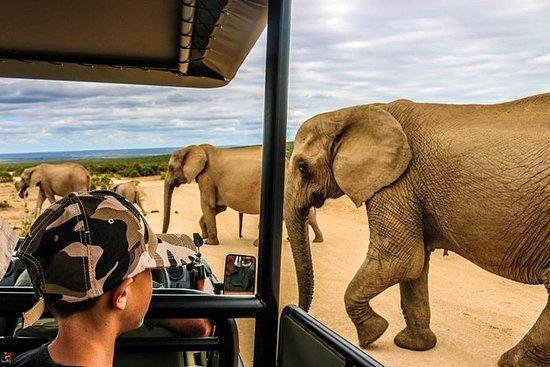 全日阿多国家公园野生动物园
