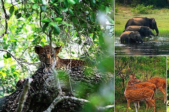 Yala Safari dagstur fra Kalutara og...