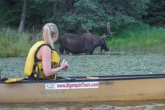 5天阿冈昆公园独木舟之旅 - 驼鹿和海狸野生动物园