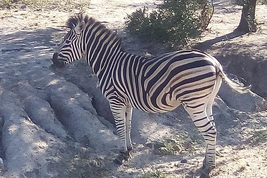 Parque Nacional Pilanesberg día...