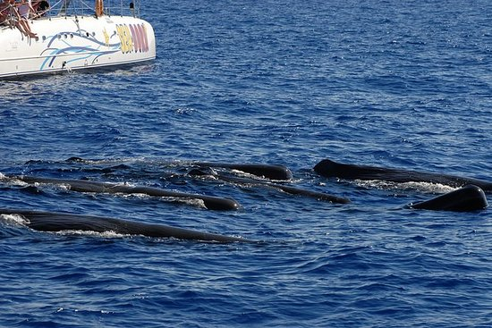 Seaborn-catamaran dolfijn en walvis ...