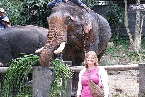 Maesa Elephant Camp, visite de la ferme...