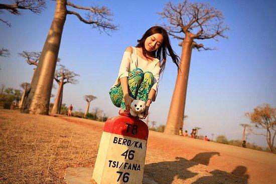 Baobab e Tsingy di Bemaraha!