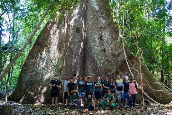 Projeto Caminhos da Floresta