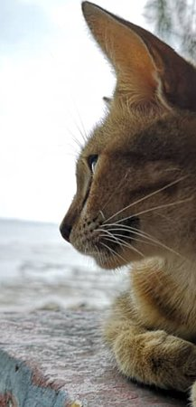 Pantai Remis, มาเลเซีย: Beach Cat