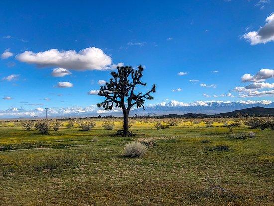 Butte Valley Wildflower Sanctuary