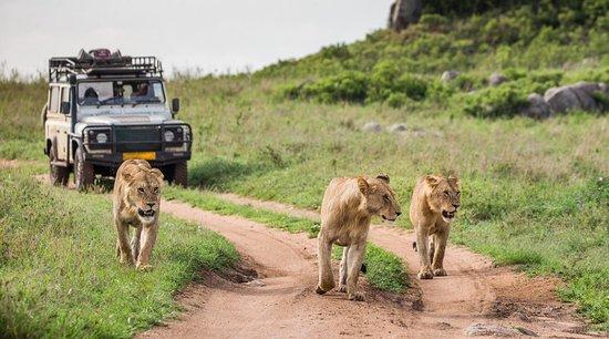 Apexx Tours Tanzania