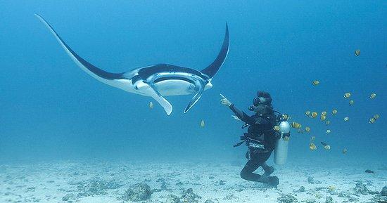 GO BLUE Scuba Diving