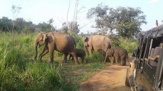 Chewore Safari Area, Зимбабве: Habaran  ECO Safari  0718322019