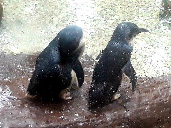 The Dallas World Aquarium 2020 All You Need To Know Before You Go With Photos Tripadvisor