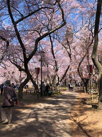 Super parc pour voir les Sakura